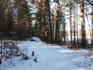 frozen-lake2